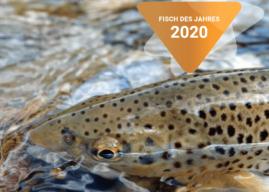 FISCH DES JAHRES 2020 IN ÖSTERREICH