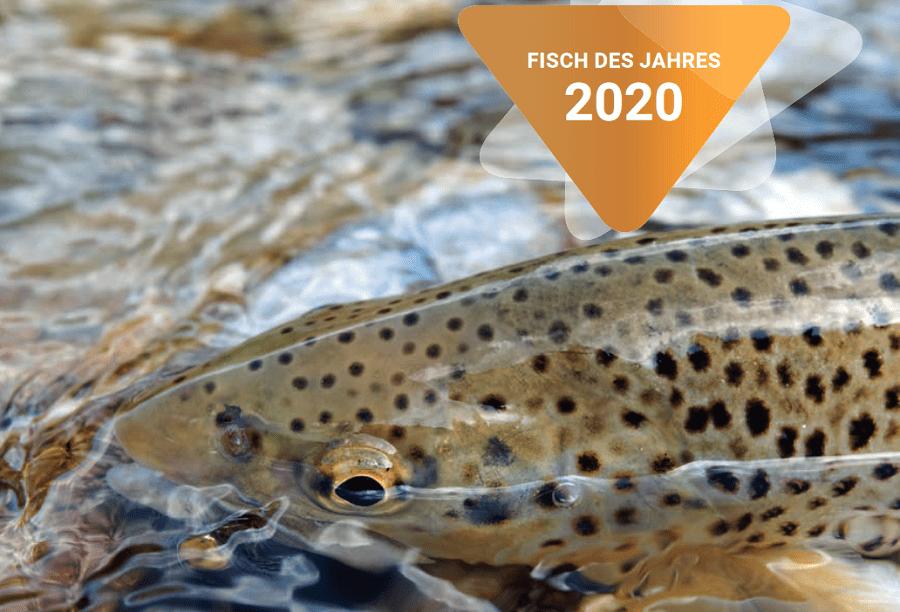 Fisch des Jahres Austria